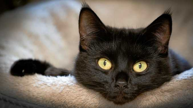 Mim Mim is 1.5 years old and awiating your visit to RSPCA Noosaville to take her home