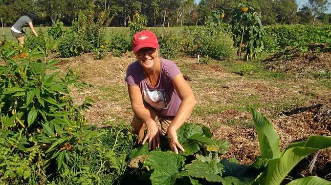 VEGGIE VILLAGE: Community garden president Karen Sell tending to the produce.