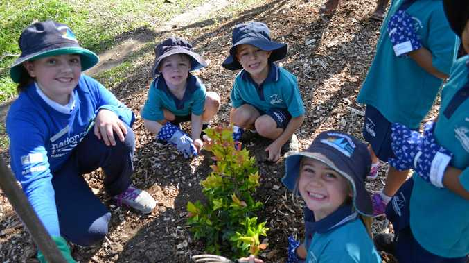 DIGGING IN: Noosaville State School Year 6 students and Preppies had fun planting native lilly pillies for National Tree Day.