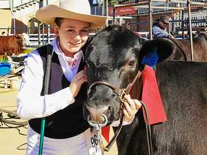 Country tune keeps cattle calm