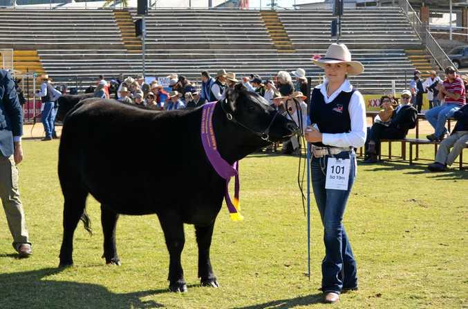 TOP EFFORT: Handler Chloe Plowman leading Ruby Ridge Mackenzie, a heifer that was named junior angus champion.