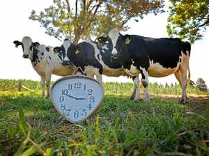 'Daylight savings? Can't do it... my cows will fade!'