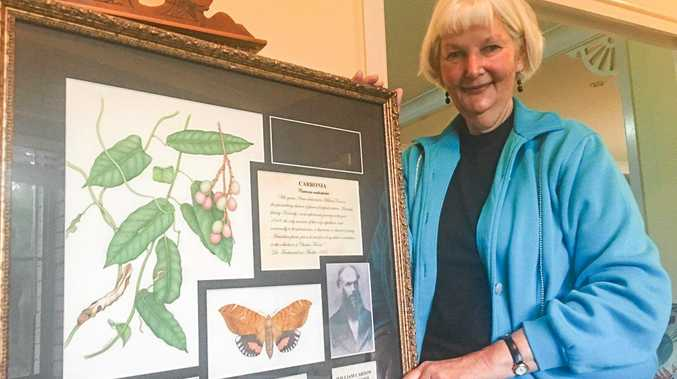 COMMON BOND: Illustrator and botanist Janet Hauser with her tribute to William Carron, one of three survivors of the 1849 Kennedy Expedition.