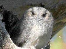 Club checks out birds at Highfields