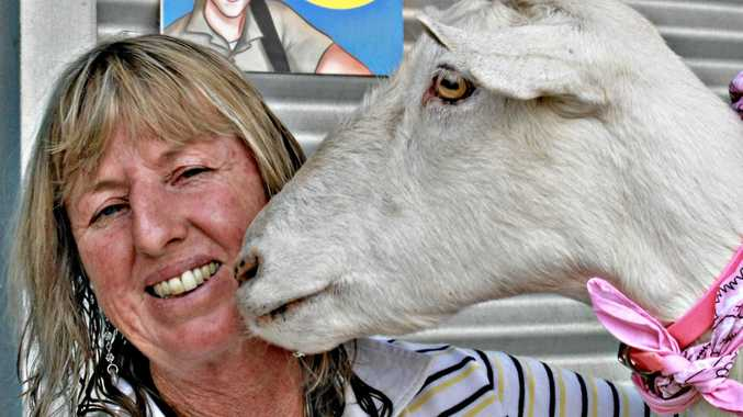 Lesley McDowell with one of the 13 goats she brought to the Ekka.