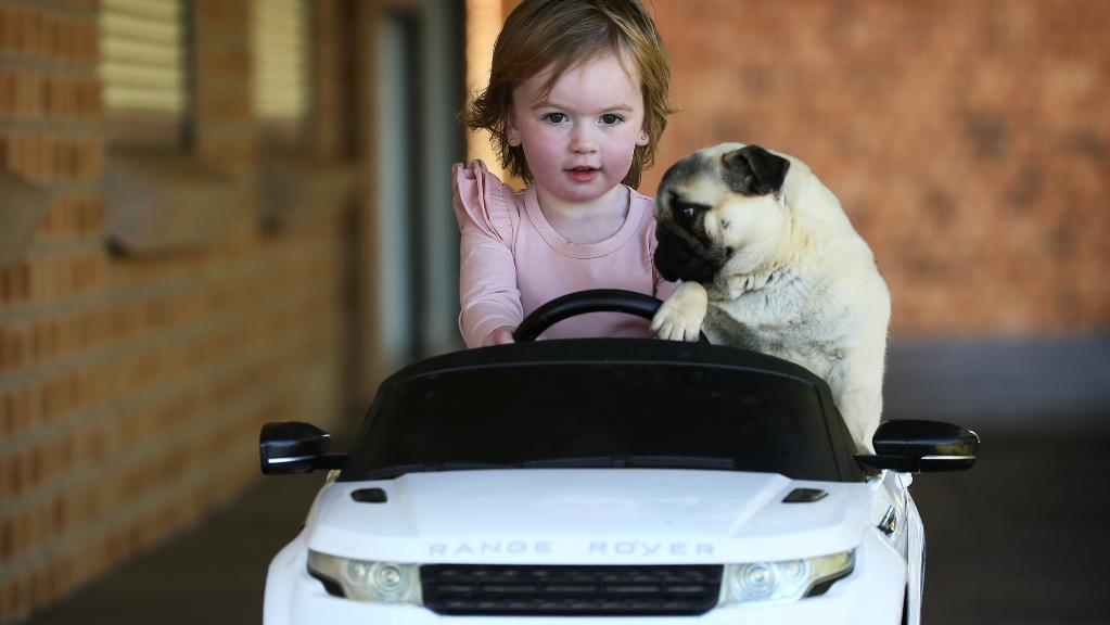 Koopah Gaudry, 2, with her pug Stella. Picture: Toby Zerna