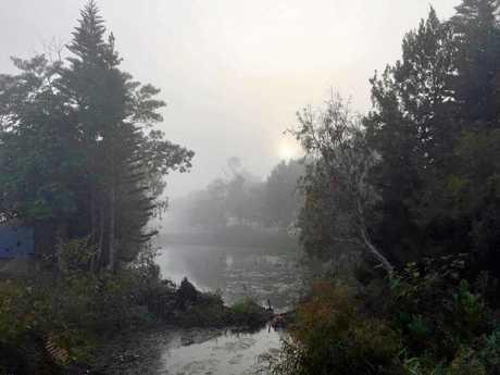 Mist through the trees.