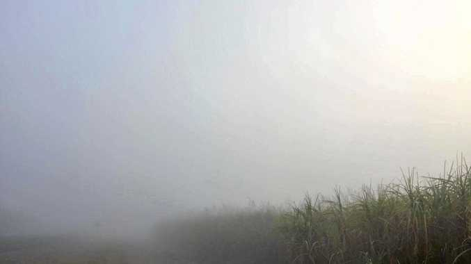 THICK FOG: Cane fields are barely visible through the fog.