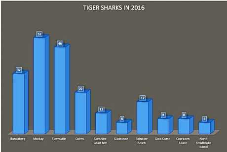 FRENZY: Tiger sharks caught throughout Queensland last year.