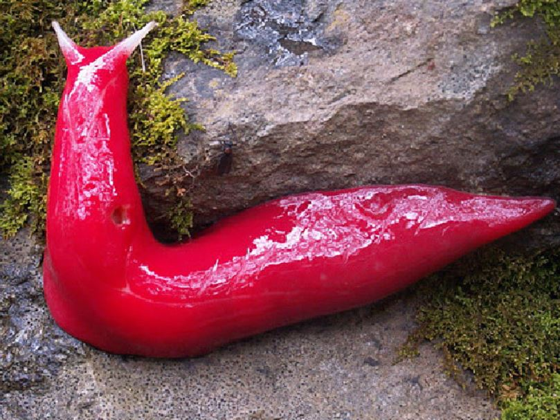 Slugs don't get much prettier than the ones at Mount Kaputar.