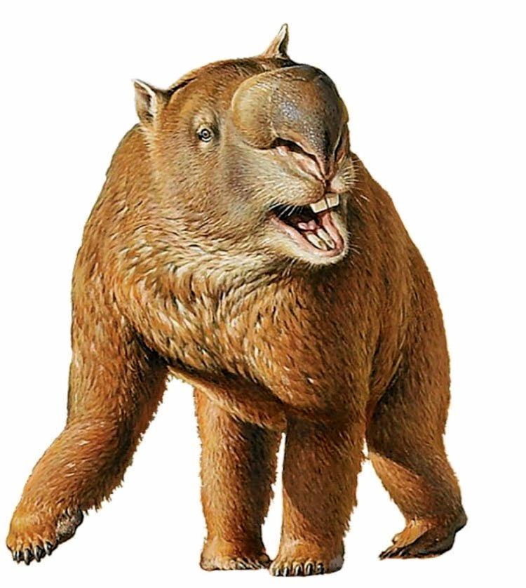 MEGA MARSUPIAL: A Diprotodon, the largest known marsupial to have ever lived. A jawbone found by Ipswich miner Dennis Russell belonged to a Kukaodonta, a giant marsupial similar to the Diprotodon.