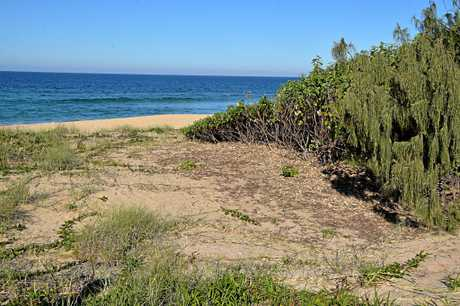 Trees have been cleared from sand dunes at Shelly Beach.
