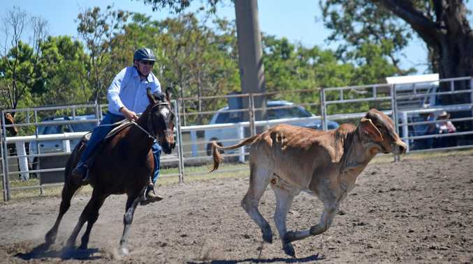 PURSUIT: Warren Watts chased cattle at the Proserpine Showgrounds Campdraft on Sunday.