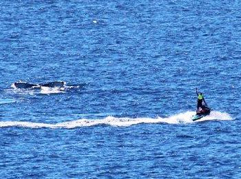 Jet-ski riders get close to a whale in waters off Noosa National Park.