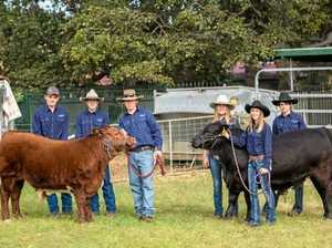 'Beef capital' compliments its title with EKKA win