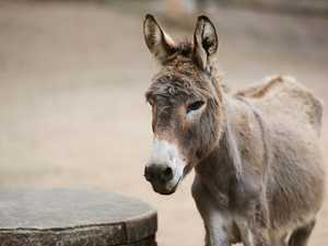 Fifteen teens catch deadly rabies after raping donkey
