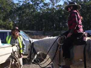 Missing horse reunited with family