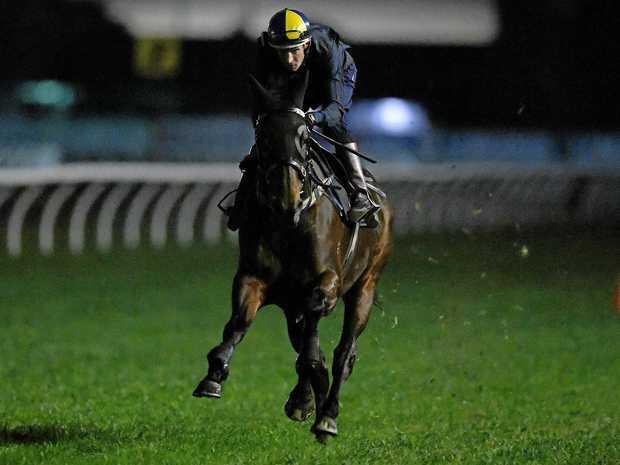 Winx, ridden by jockey Hugh Bowman, takes part in trackwork at Rosehill Gardens.