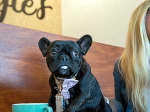 ENJOY a fun doggie day out at Moonee Beach Tavern.