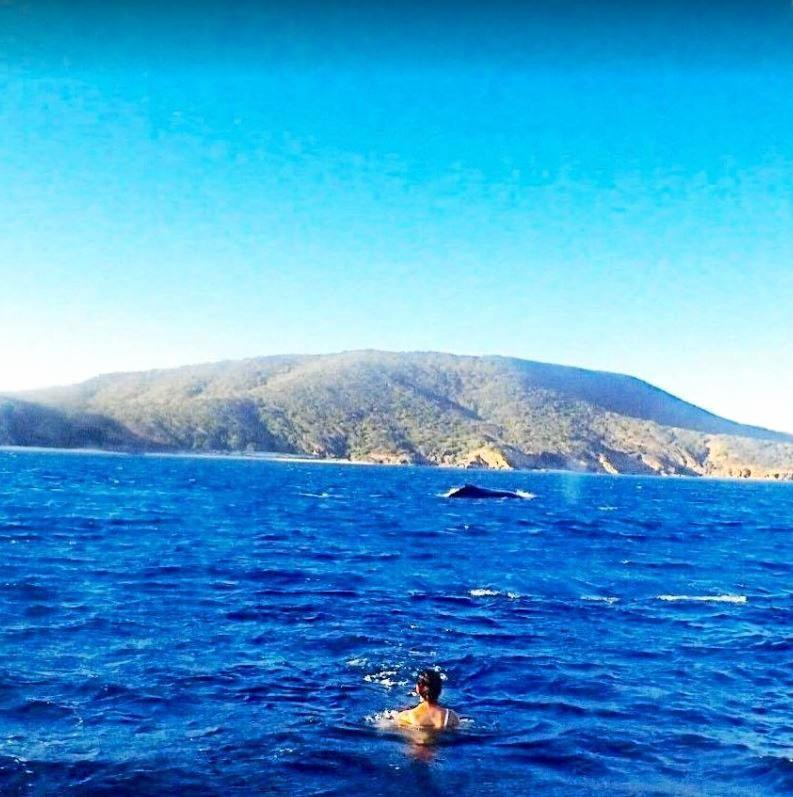 A whale breaches in the distance of Kiha Bonney's swim at Great Keppel Island.