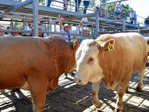 NRLX cattle sales cancelled