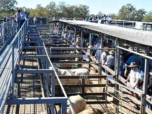 Casino Saleyards has benefited from infrastructure funding.