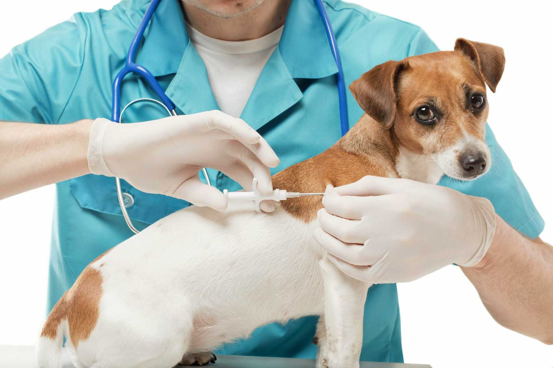 NEW VET: Families will be looking for a new vet after the sudden closure of a popular Coast surgery.