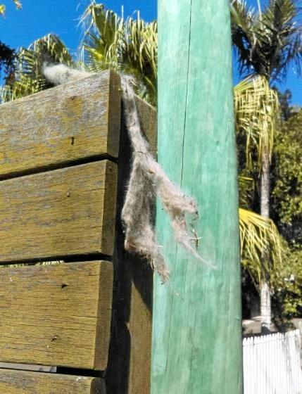 CREEPY: A large clump of cat hair thought to be stuffed onto a letterbox.