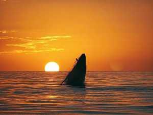 The best whale watching spots in the Mackay region