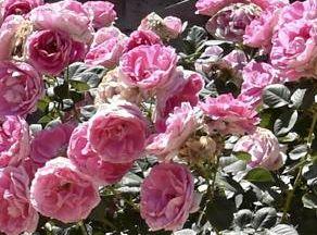 Fears over wrecked memorial gardens