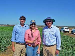 Advanta Seeds oats field walk