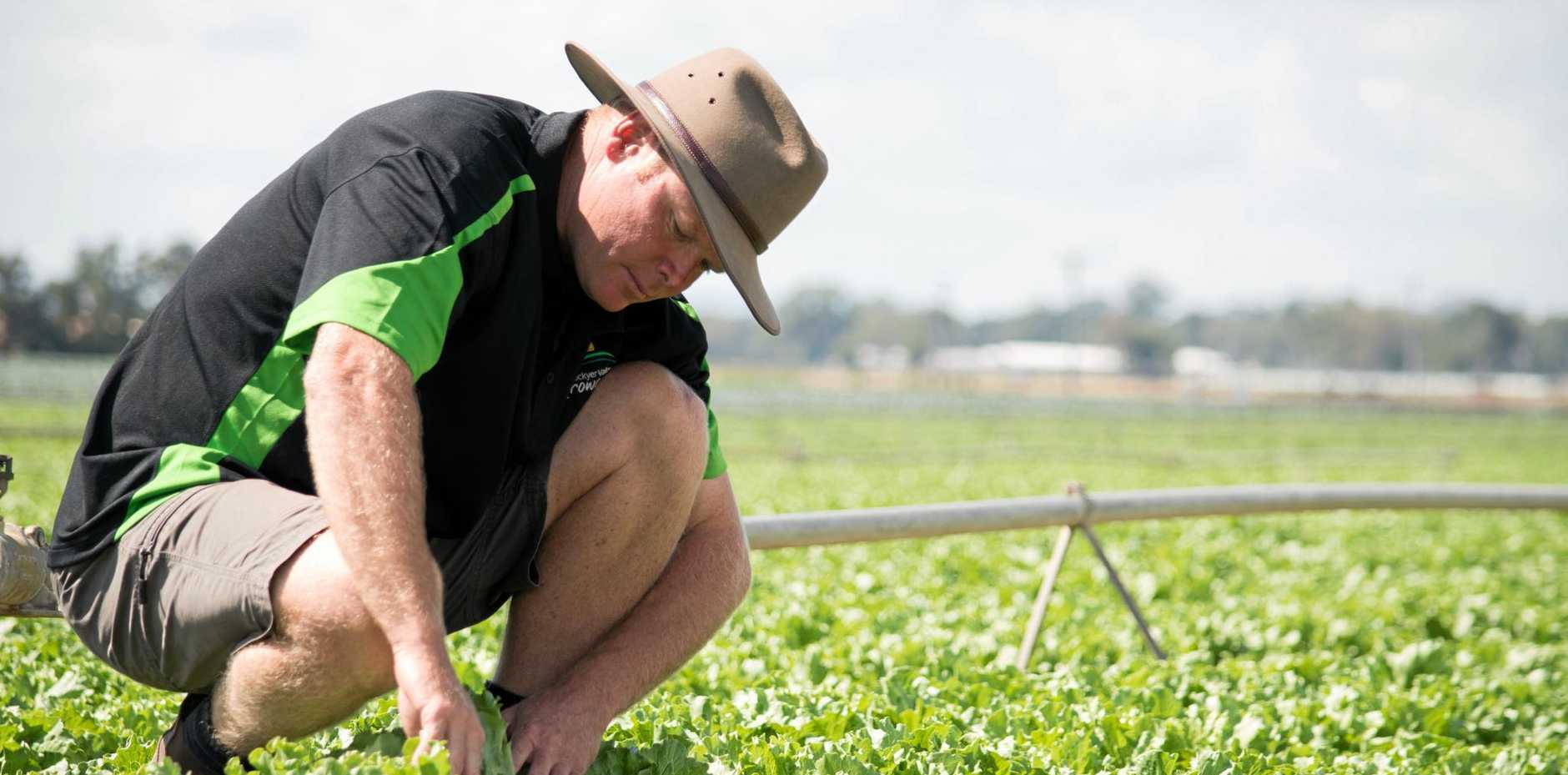 WINTER VEG: Lockyer Valley Growers Association president Michael Sippel says farmers are feeling the early heat.