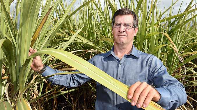 TOUGH SEASON: Canegrowers Maryborough manager Cameron Waterson said this year's crop can't recover, with about 600,000 tonnes expected from the rush season.
