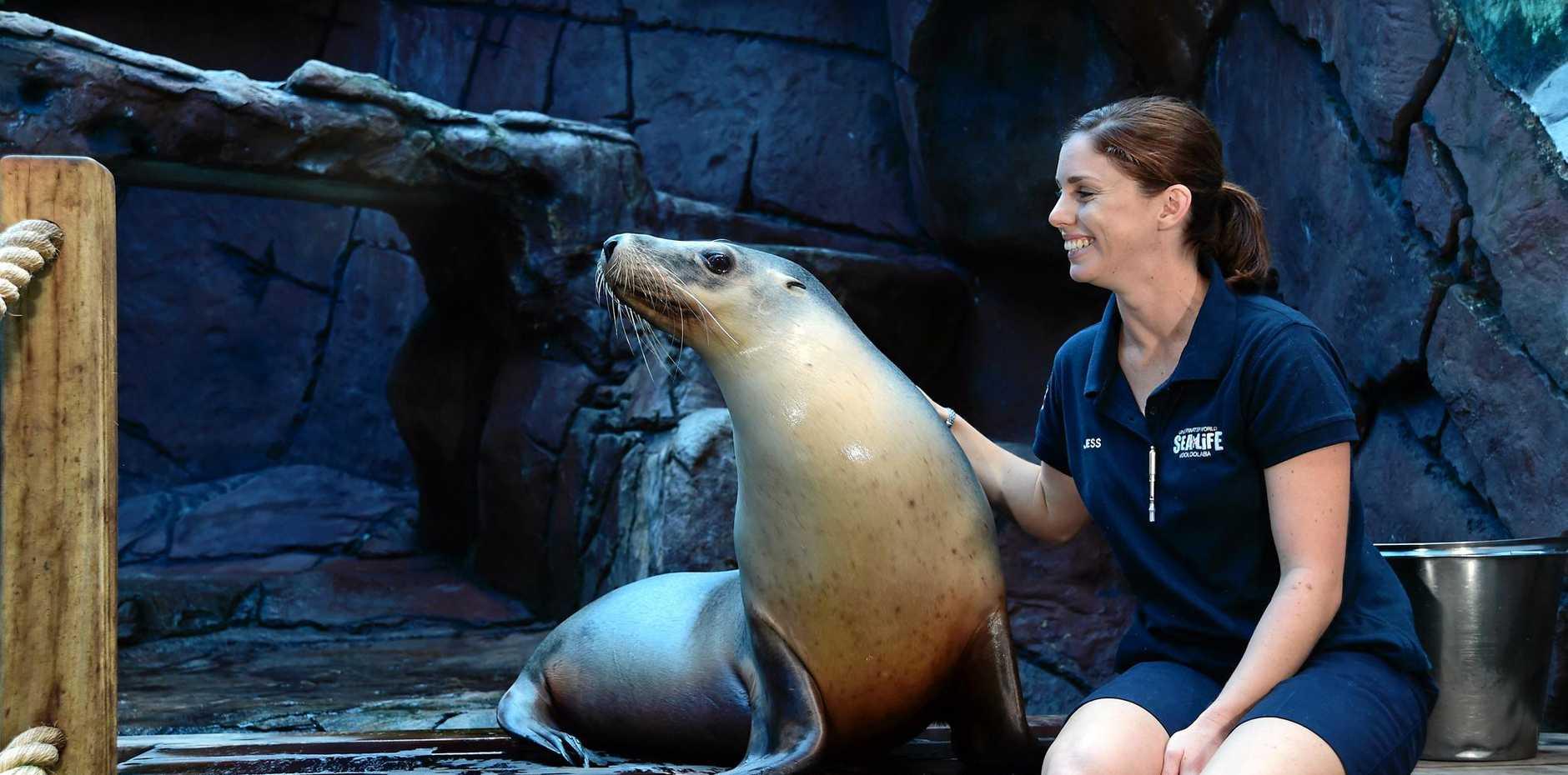 Underwater World senior seal trainer Jess Heading with Australian sea lion Portia on her 25th birthday.