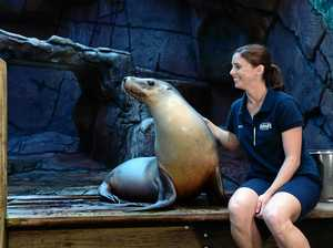 Australia's oldest sea lion up to mischief on the Coast