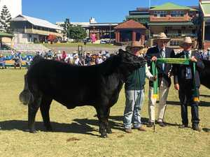 Allora steer slides into second