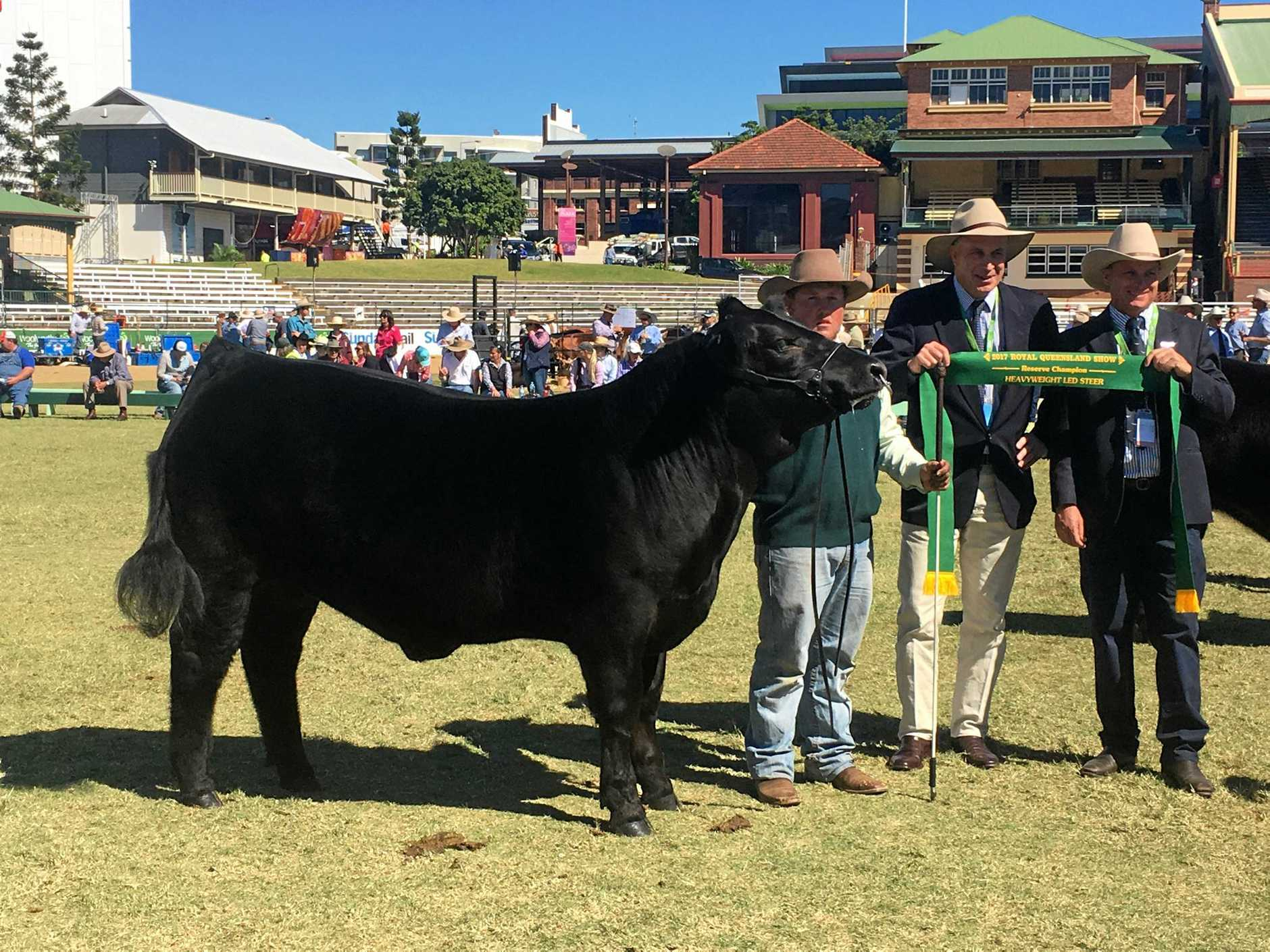 (from left) Jamie Hollis from Pittsworth showing Mars Bar on behalf of Elwanvale Limousins, with Brett Thompson from Woolworths and judge Craig Price.