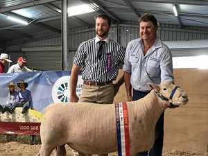 Darling Downs sheep scoop up Ekka wins