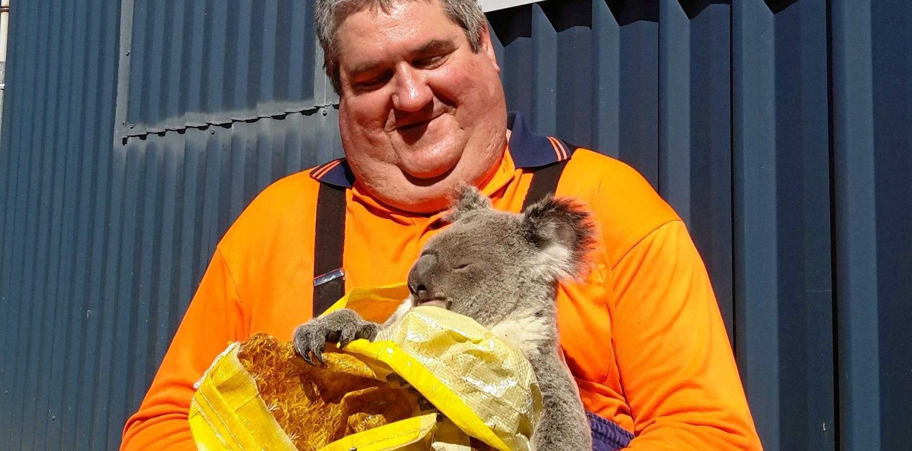 CUDDLES ON THE JOB: Craig Coulter with Anuha's latest wild visitor.