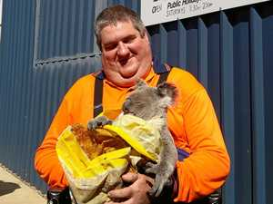 Wild visitor drops in to Anuha tip shop