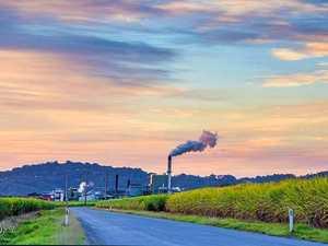 Sunshine Sugar mill claims 'ridiculous': union