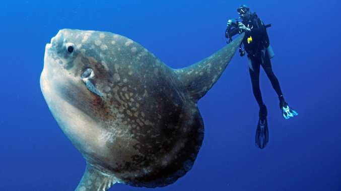 atlantis-bali-diving via Sunshine Coast Daily