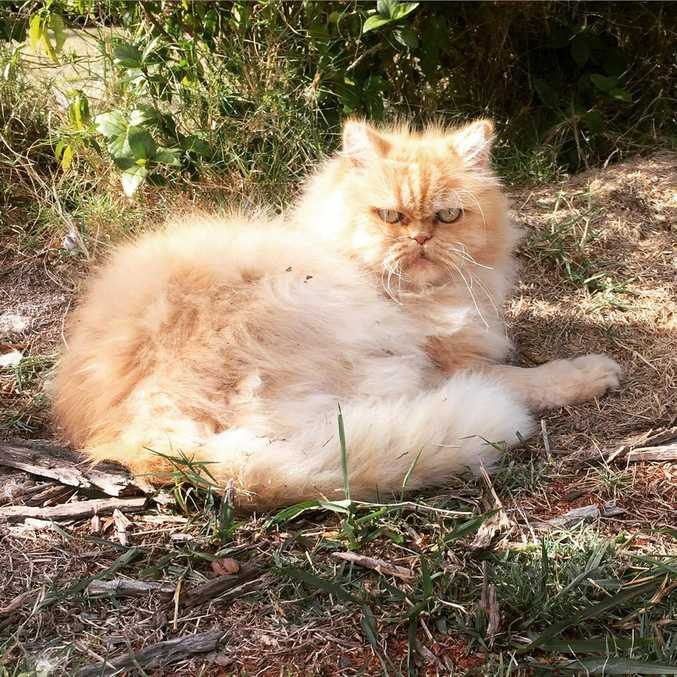 Michelle Sutton's cat Herbie died after two pigging dogs mauled it.