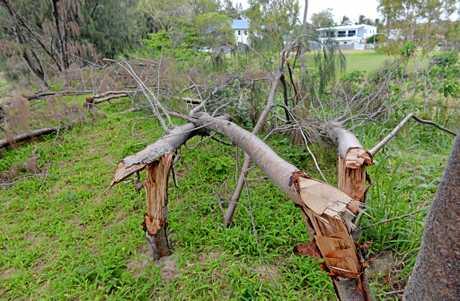 Trees in Turtle Place Blacks Beach vandalised.