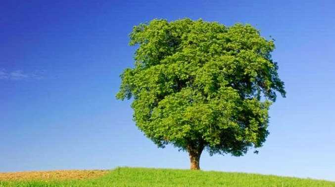 A court heard that it took 'half a tree' to get a man to court.