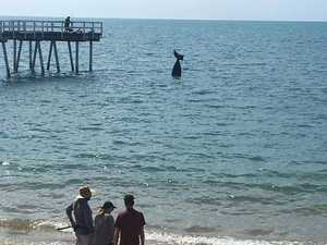 What's that in the water off Hervey Bay?