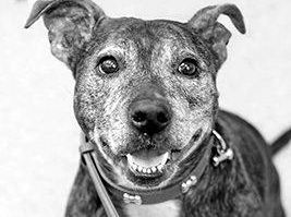 Heartbroken dog found next to dead carer needs new home