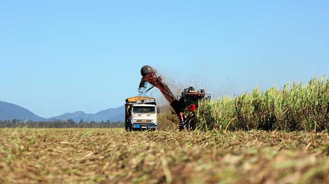 Sugar cane harvesting at Gregory River near Proserpine.