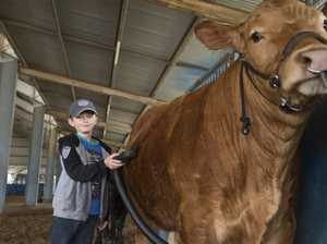 Aussies and Americans to battle it out at Beef Expo
