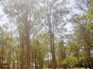 Disliking trees no reason to remove them, council confirms